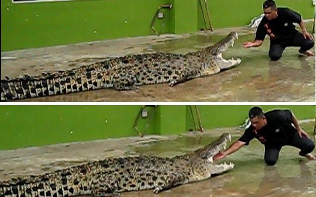 crocodile_show_1